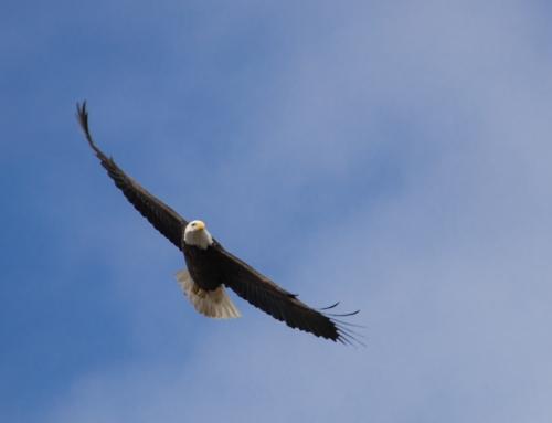 Leben mit der Gesinnung eines Adlers (Teil 4)